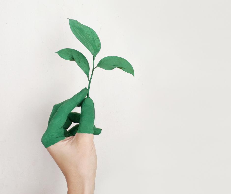 Montags-Impuls_ nachhaltiges Leben
